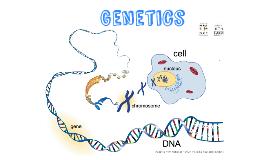 8th grade Genetics