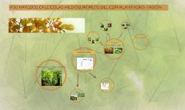 9150 HAYEDOS CALCÍCOLAS MEDIOEUROPEOS DEL CEPHALANTHERO- FAG