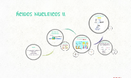 Copy of ÁCIDOS NUCLEICOS II