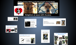 Horsehead Animal Shelter; made easy with Access