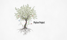 Phylum Project