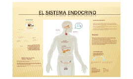 Copy of El sistema Endocrino