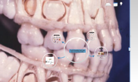 Copy of Tooth Development and Associated Anomalies