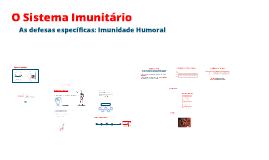 O Sistema Imunitário - As defesas específicas: Imunidade Humoral
