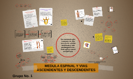 Copy of MEDULA ESPINAL Y VIAS ASCENDENTES Y DESCENDENTES