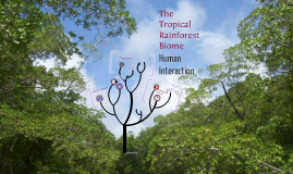 The Tropical Rainforest Biome: Animals