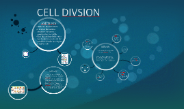 CELL DIVSION