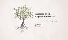 Estudios de la organización social