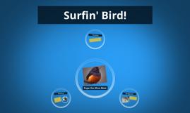 Surfin' Bird!
