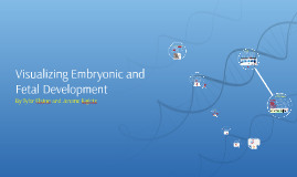 Copy of Visualizing Embryonic and Fetal Development