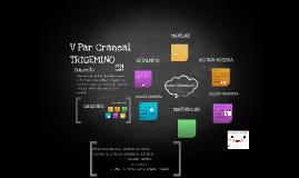 Copy of V Par Craneal  TRIGEMINO