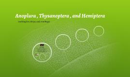 Anoplura , Thysanoptera , and Hemiptera