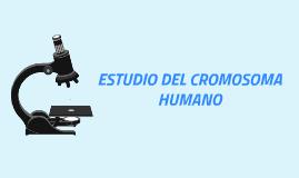 ESTUDIO DEL CROMOSOMA HUMANO