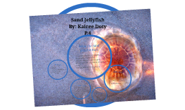 Copy of Sand Jellyfish