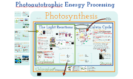 Energy 4:  Photoautotrophic Nutrition