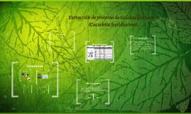 Extracción de proteína de Calabacilla Loca