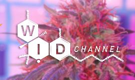 Copy of Mundo Growshop - Wid Channel