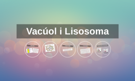 Vacúol i Lisosoma