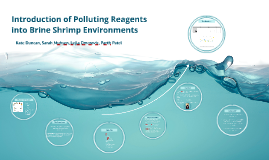 Pollution in Brine Shrimp Environments