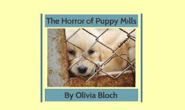 The Horror of Puppy Mills