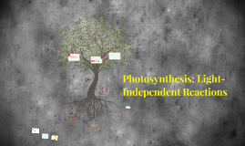 Photosynthesis: Light-Independent Reactions