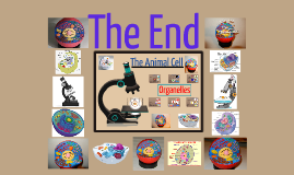 The Animal Cell
