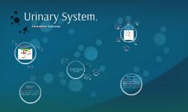Urinary System.