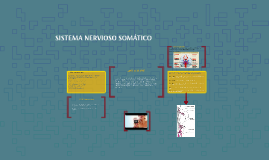 Copy of SISTEMA NERVIOSO SOMÁTICO