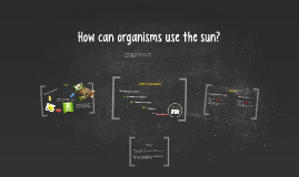 How can organisms use the sun?