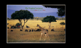The Tropical Savanna