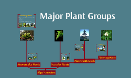 major plant group 1 major plant groups 2 group 1: seedless, nonvascular plants live in moist environments need water to reproduce grow low to ground (nonvascular) lack true leaves common pioneer species.