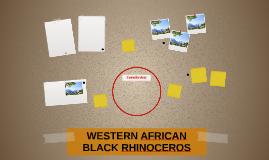 WESTERN AFRICAN BLACK RHINOCEROS