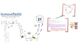 Homeostasis: Negative and Positive Feedback Loops