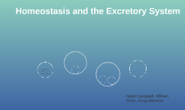 Homeostasis and the Excretory System