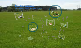 Copy of GRASSLAND ECOSYSTEM