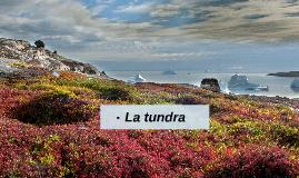 Proyecto Tundra
