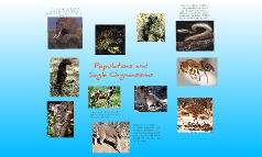 Savannah Ecosystem