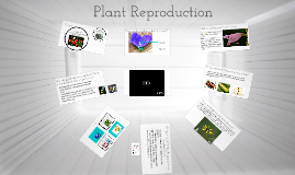 Plant Reproduction: Angiosperms and Gymnosperms