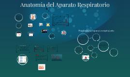 Copy of Copy of Anatomia del Aparato Respiratorio
