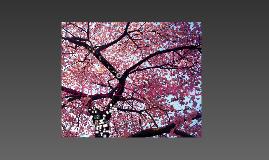 Emma's Blossom