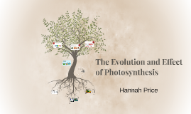 The Evolution and Effect of Photosynthesis
