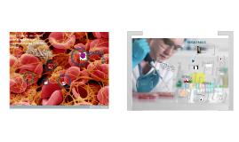 Obtención de un cultivo primario de células sanguíneas para cultivo celular