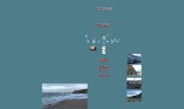 Estabilização de Arribas na Orla Costeira
