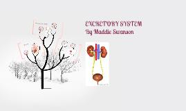 Copy of EXCRETORY SYSTEM