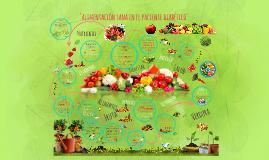 Alimentacion sana en el paciente diabetico