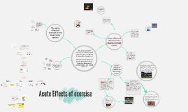 Copy of Acute Effects of exercise