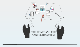 THE HEART AND THE VASCULAR SYSTEM