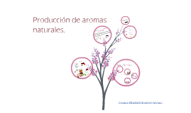 producción de aromas naturales