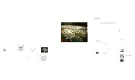 Stora projekt 2014 04 24 med MSS