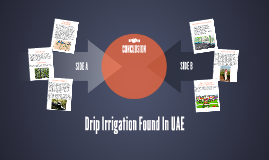 Drip Irrigation Found In UAE